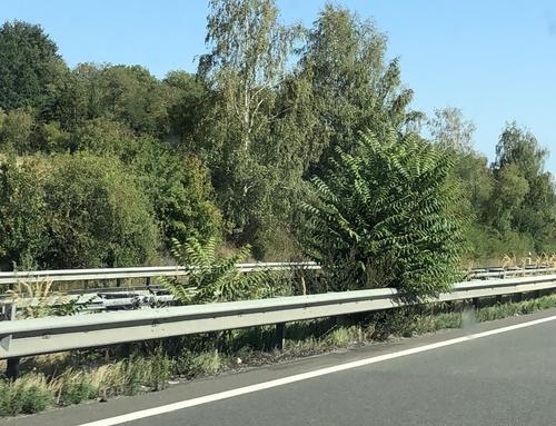 In the median strip of Highway A1 near the port of Mertert. Photo: © Yves Krippel, 20200907,