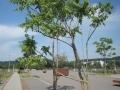 Ailanthus-altissima_Belval_2014-07-23_03